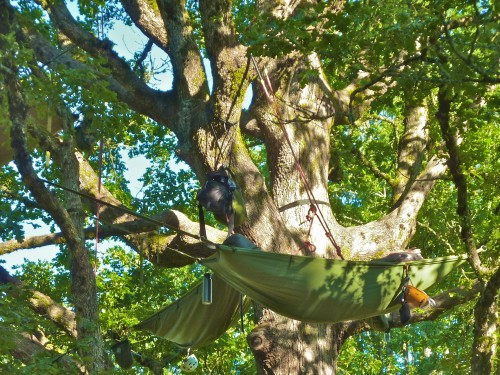 Tree Climbing Class