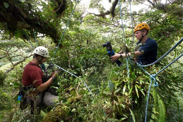 rainforest filming